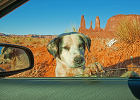 Dog in Sedona